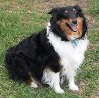 My sweet Lexi in Spring 2008