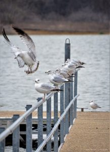 Some seagulls try to find a better spot to stay warm. ...