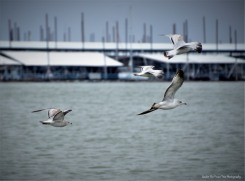 ... Some seagulls soar in the wind.