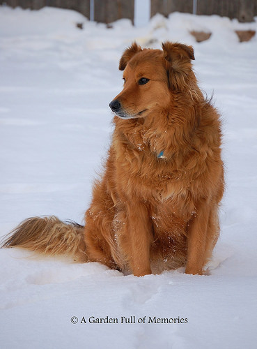 Ranger in his favorite element (2011)