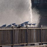 What would be a lake without seagulls? ;)