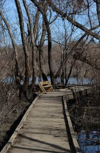 Boardwalk at the Bittern Marsh Trail