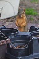 """""""Oh boy! I have a lot of work ahead of me, planting all those acorns and pecans this Spring."""""""