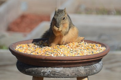 """"""".... Ha, figured it out! ... Oh my, this corn is sooo good!"""""""