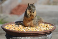 """""""I know, that sounds mischievous.But if I step a little bit more in the middle, the Blue Jay can't get those peanuts. Muhahahaha!"""""""