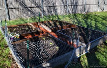 All four raised beds are filled in with soil and planted. And the walkway is mulched.