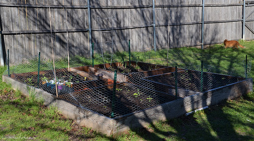 The Vegetable Raised Bed project is done.
