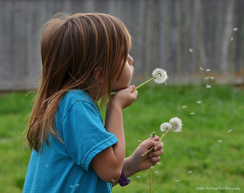 Sara found dandelion in the yard.