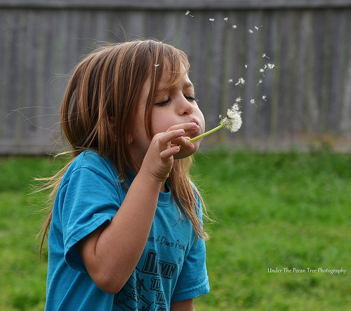 Sara loves blowing the dandelion seeds of the stem.