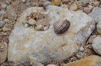I found a shell between the pebbles.