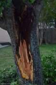 A big limb got ripped out of the ornamental tree.
