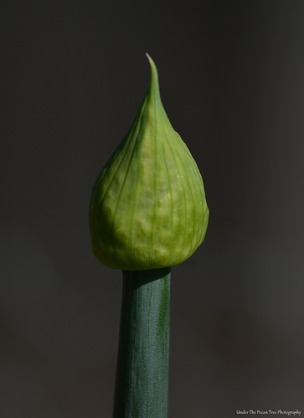 The Green Onion will bloom, soon.