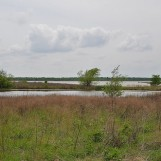 Wetland Pond and Lewisville Lake