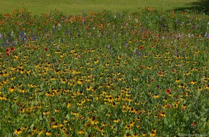 An Ocean of Wildflowers