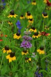 Bee Balm, Larkspur, and Mexican Hats