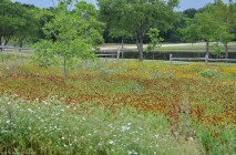A little patch of Blackland Prairie at tJosey Ranch Lake