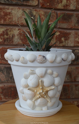 A shell flower pot I made three years, ago. A pineapple plant is growing in it.