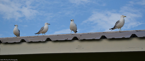 "Seagulls; the locals call them ""Rat's with wings"""
