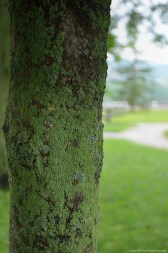 I love these moss covered tree trunks.