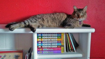 Joshua went up on the book shelf and licked it, before he laid on it.