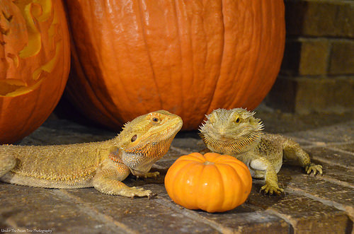 """""""What do you think? Should we eat it now, or should we wait until after Halloween?"""" ~ """"I'm hungry!!!"""" (October 2014)"""
