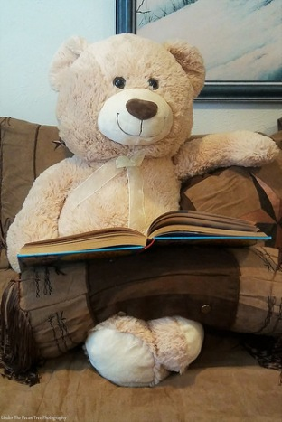 Teddy reads my old childhood book.