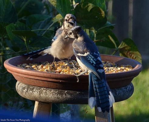 """If you are thirsty, they left a bird bath out over there."""