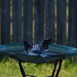 """""""Ooh, this is even better! I love this bird bath!"""""""