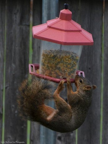Sandy tangles from the bird feeder, while she tried to get some corn.