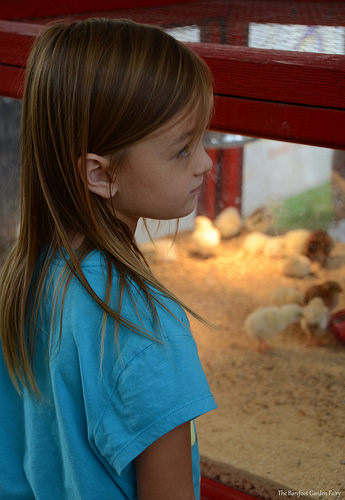 Sara looks at some chicks and other farm animals at the Big Tex's Farmyard.