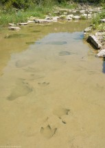 Dinosaur tracks in the pool of the Paluxy River