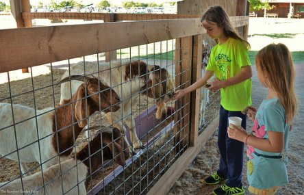 Katelynn shows Sara how easy it is to feed the livestock.