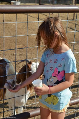 Sara overcame her fear and fed goats of all sizes.