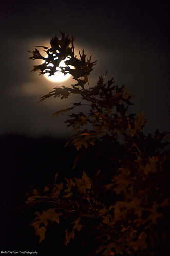 Autumn begins to arrive in North Texas. The oak leaves dance in the Harvest Full Moon.