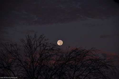The Harvest Moon shines bright in the western skies this morning.