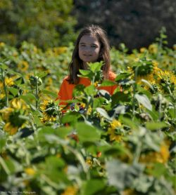 Katelynn in the Sunflower Maze