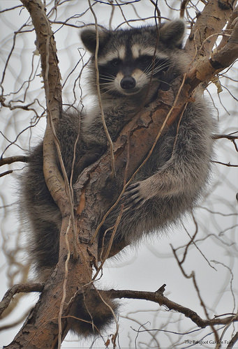 """""""I love trees! They make me feel safe from other predators. And they provide a lot of shade in the ht Texas Summers. Plant a tree, today. And my friends and I can enjoy it in the future. Happy Texas Arbor Day!"""""""