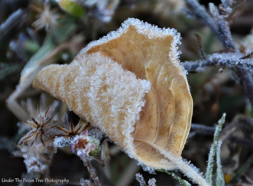 It was a little bit frosty in North Texas, this morning.