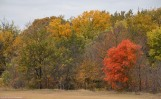 Autumn at Bill Allen Memorial Park
