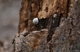 Snail shell on a tree