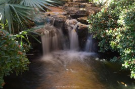 Small waterfall by the Koi fish pond