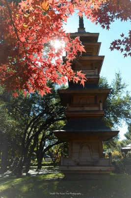 Beautiful Pagoda surrounded by Autumn maple leaves