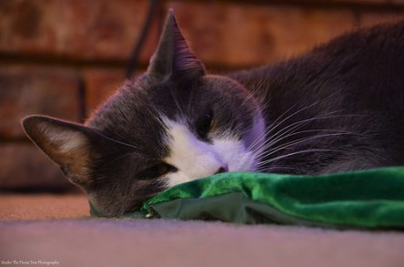 Finley snoozes on the tree skirt under our Christmas tree.