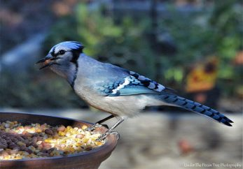 """""""Oh, the lady left some peanuts for us! Yummy!"""""""