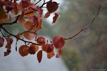 Rainy Autumn Day in December