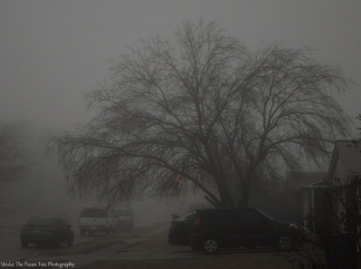 We had quite a bit of fog, before the neighbors left for work this morning.