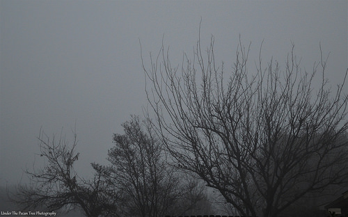 Foggy Backyard Trees