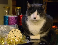 In Memory of Finley, when he celebrated New Year's Eve.