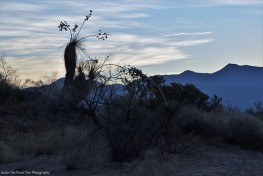 New Mexico' vegetation before sunrise