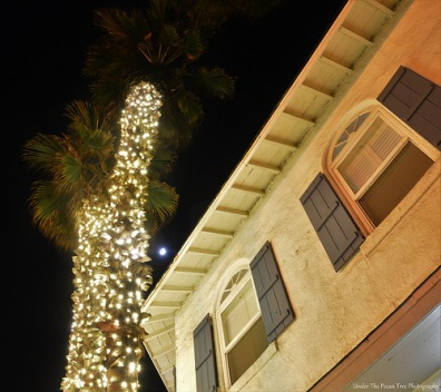 Christmas lights on palm trees and the Moon in San Diego